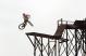Велосипед NS Bikes Movement 3 (2020) 6